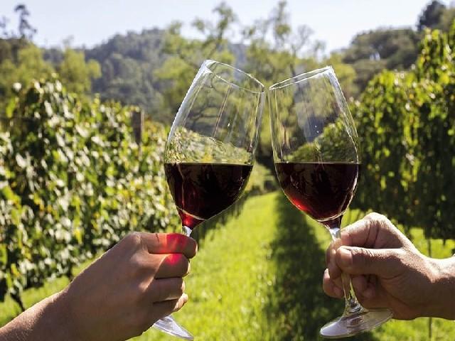 Rota Do Vinho