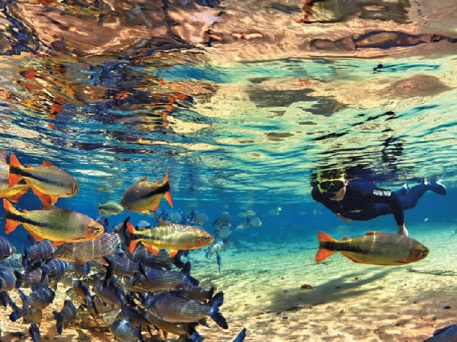 7 Destinos para Snorkel no Brasil