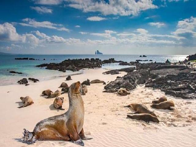 Praia De Galápagos, Equador