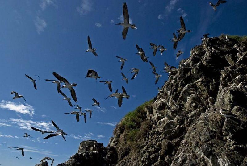 Aves Isla Gorgona
