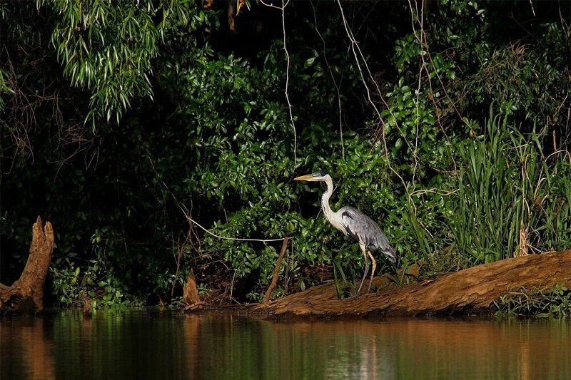 Ecoturismo no Uruguai - Parque Nacional Esteros De Farrapos
