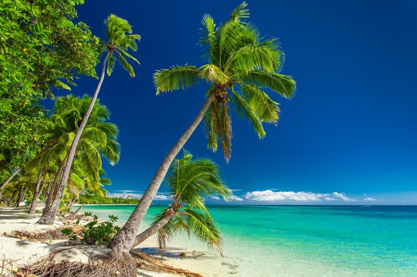 Tropical Beach With Palm Trees On Fiji Islands