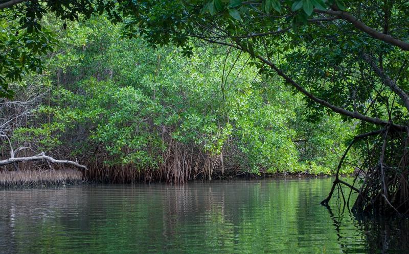 Island Of Margarita Venezuela Laguna De La Restinga